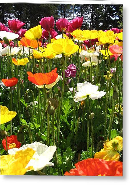 A Sea Of Poppies Greeting Card