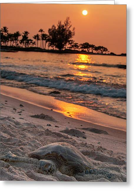A Sea Turtle Rests On The Beach Greeting Card
