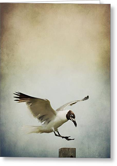 A Seagull's Landing Greeting Card