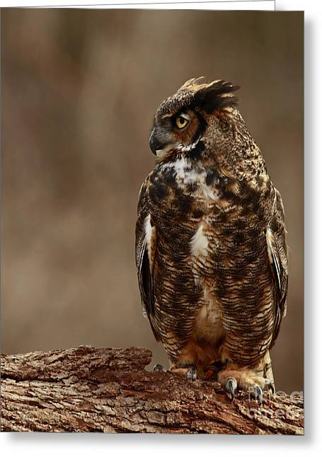 A Sense Of Mystery Of The Great Horned Owl  Greeting Card