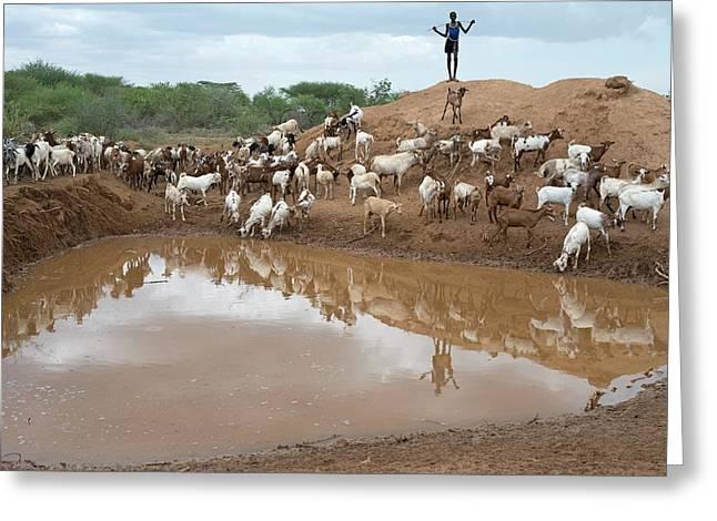 A Sheperd Tending Goats At A Waterhole Greeting Card by Tony Camacho