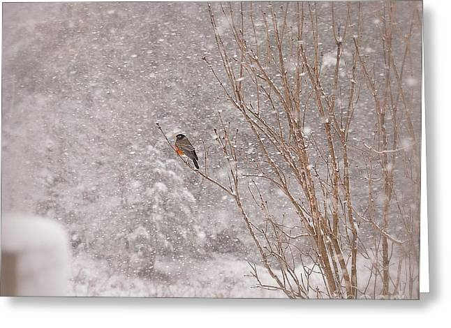 Greeting Card featuring the photograph A Sign Of Spring by Brenda Bostic