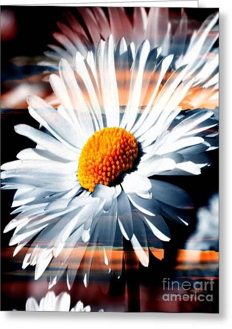 A Simple Daisy Greeting Card
