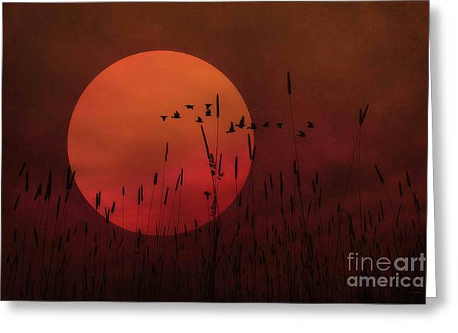 A Simple Sunset In June Greeting Card
