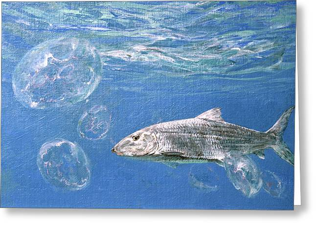 A Single Bonefish Glides Among Greeting Card by Stanley Meltzoff / Silverfish Press