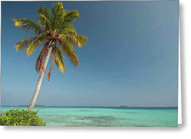 A Single Palm Tree In The Maldives Greeting Card by Scubazoo