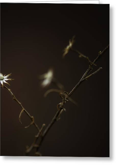 Greeting Card featuring the photograph A Sliver Of Hope by Russell Styles