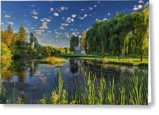 A Slough Of The Flathead River Catches Greeting Card by Chuck Haney