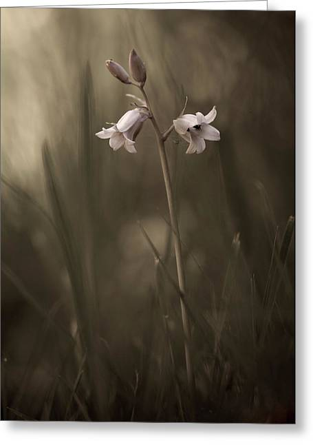 A Small Flower On The Ground Greeting Card by Allan Wallberg
