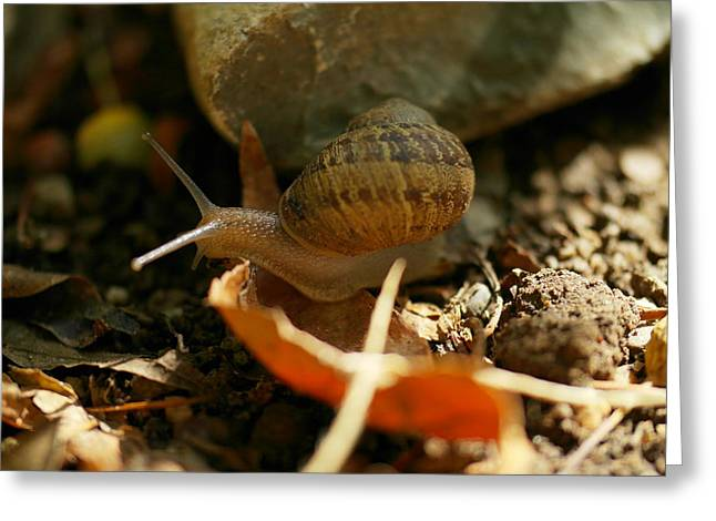 A Snail On The Move Greeting Card