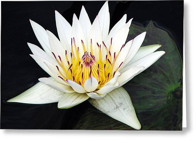 Greeting Card featuring the photograph Botanical Beauty by Rick Locke