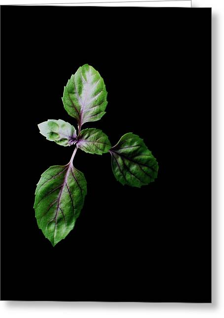 A Sprig Of Basil Greeting Card by Romulo Yanes