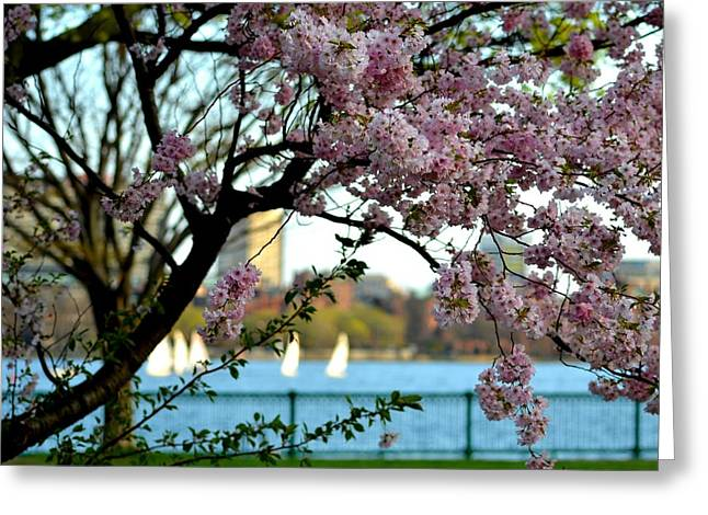 A Spring Day On The Charles River Greeting Card by Toby McGuire