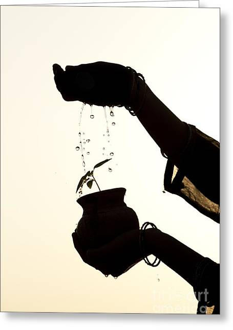A Sprinkle Of Water Greeting Card by Tim Gainey