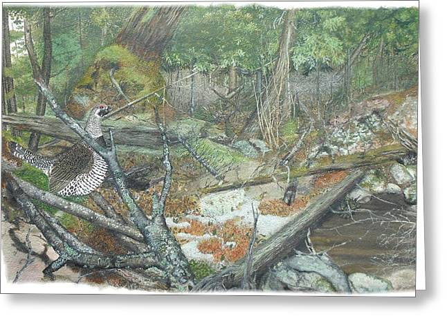 A Spruce Grouse Comes Promenading Greeting Card by Tanya  Beyer