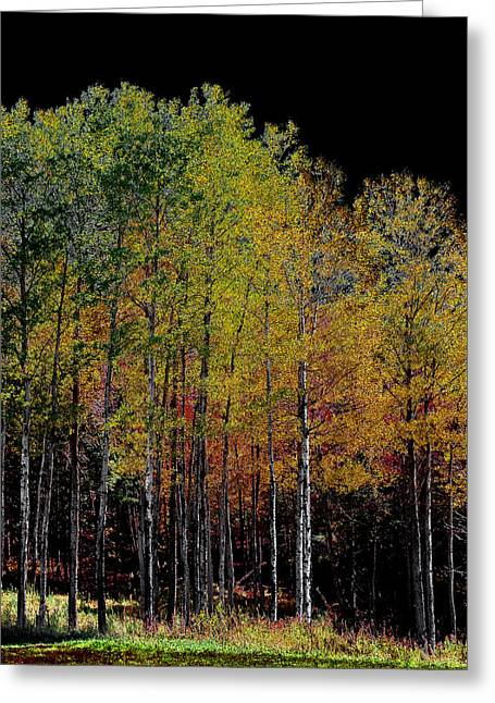 A Stand Of Birch Trees In Autumn Greeting Card by David Patterson