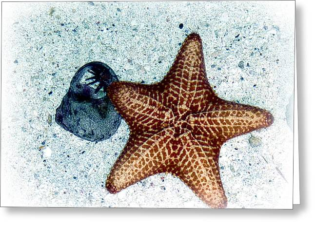 Greeting Card featuring the photograph A Star Is Born by William Havle
