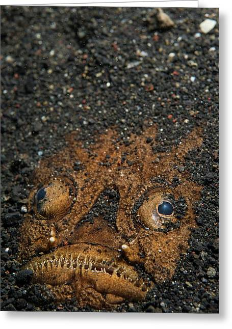 A Stargazer Half Buried In The Sand Greeting Card