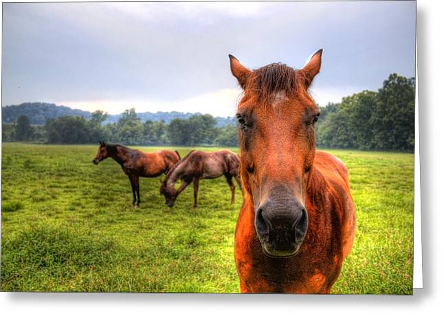 A Starring Horse 2 Greeting Card by Jonny D