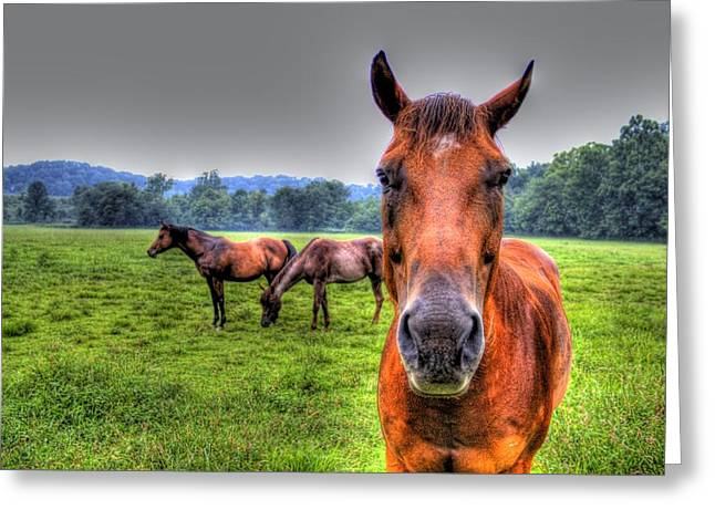 A Starring Horse Greeting Card by Jonny D