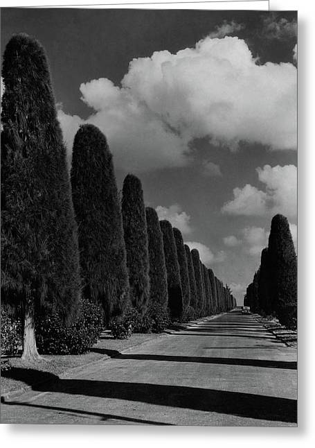 A Street Lined With Cypress Trees Greeting Card