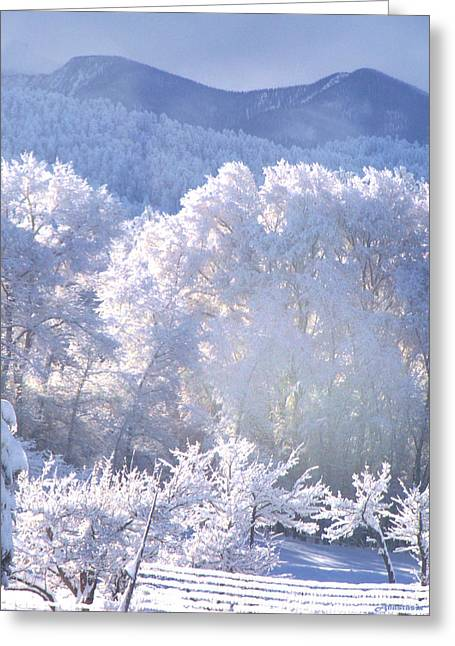 A Study In Frosty Hues Of Winter Whites And Blues Greeting Card