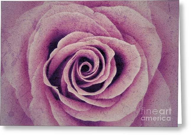 A Sugared Rose Greeting Card