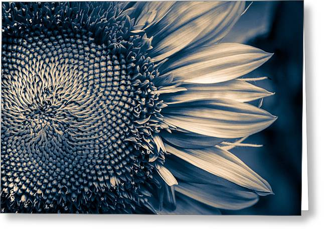 A Sunflower Dream Greeting Card by Isabel Laurent