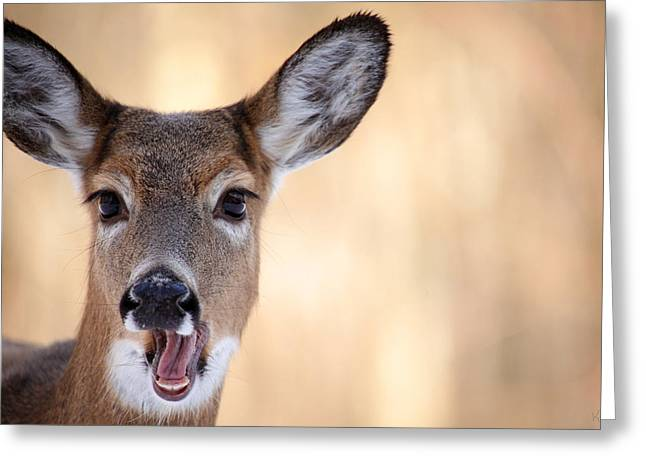 A Talking Deer Greeting Card by Karol Livote