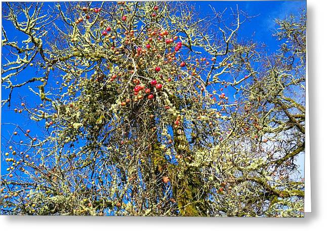 A Tangle Of Apple And Oak Greeting Card