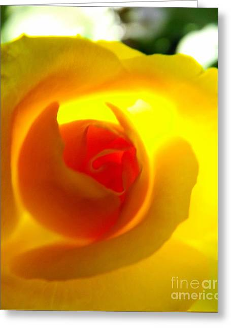 A Taste Of Summer Greeting Card by Robyn King