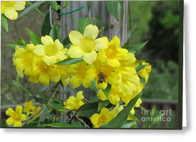 A Taste Of Yellow Greeting Card by Arlene Carmel