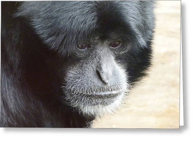 A Thoughtful Siamang Greeting Card by Margaret Saheed
