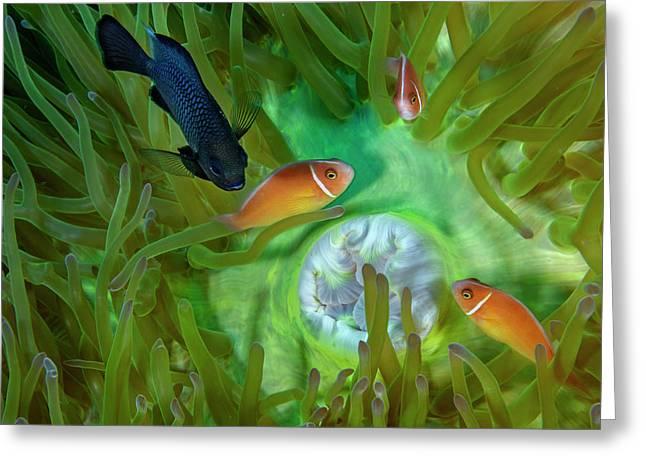 A Threespot Damselfish Swims Greeting Card