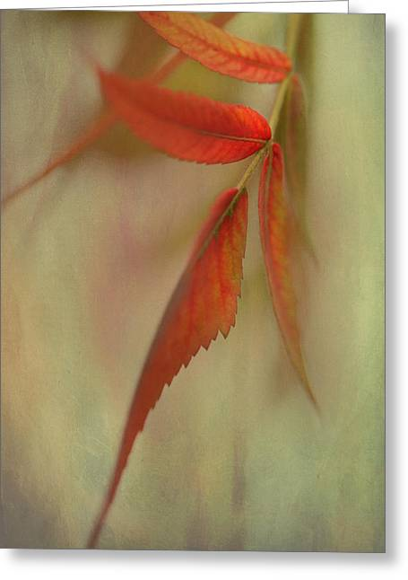 Greeting Card featuring the photograph A Touch Of Autumn by Annie Snel