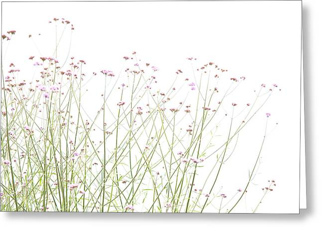 Greeting Card featuring the photograph A Touch Of Mauve by Rob Huntley