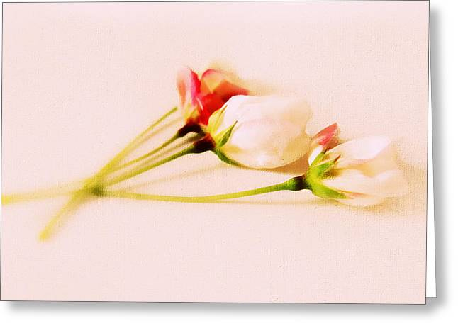 A Touch Of Spring Greeting Card by Jessica Jenney
