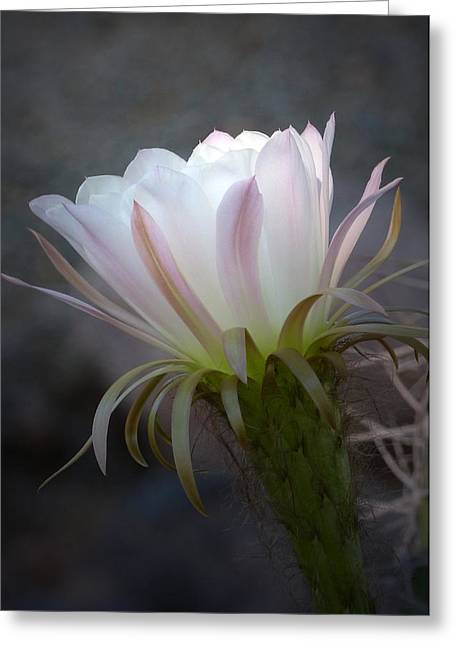 Greeting Card featuring the photograph A Touch Of Sun by Cindy McDaniel