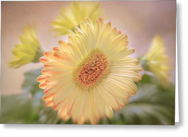 A Touch Of Sunshine Greeting Card by Fiona Messenger