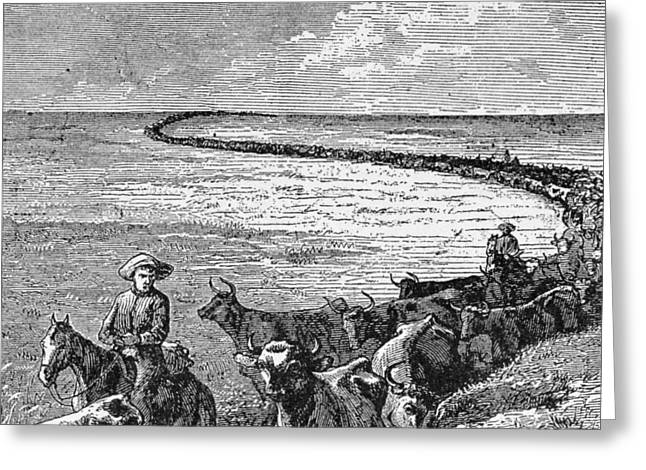 A Trail In The Great Plains, Illustration From Harpers Weekly, 1874, From The Pageant Of America Greeting Card by American School