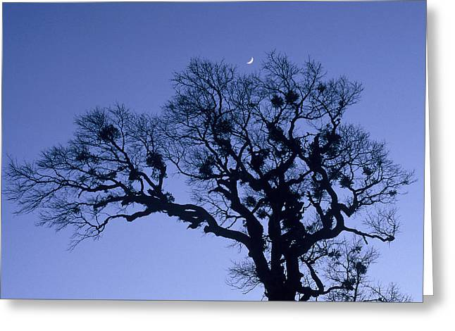 A Tree Is An Object Of Beauty X Greeting Card