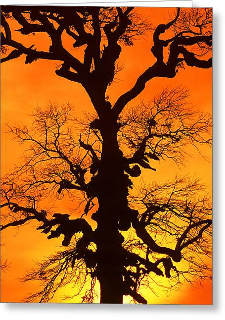 A Tree Is An Object Of Beauty Xii Greeting Card