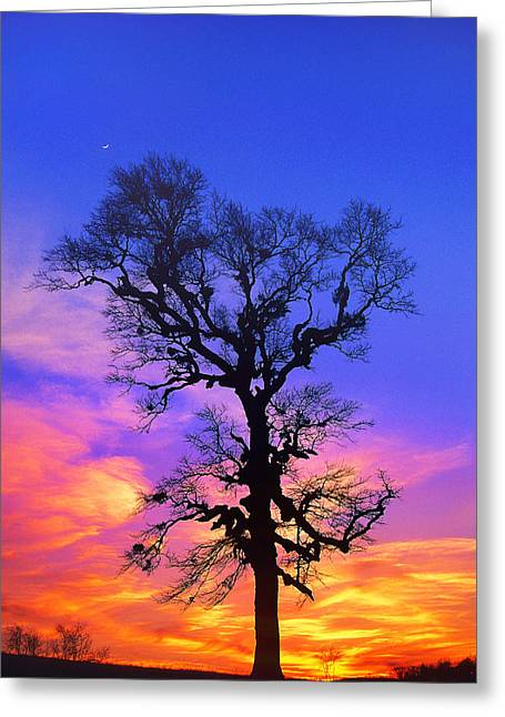 A Tree Is An Object Of Beauty Xiv Greeting Card