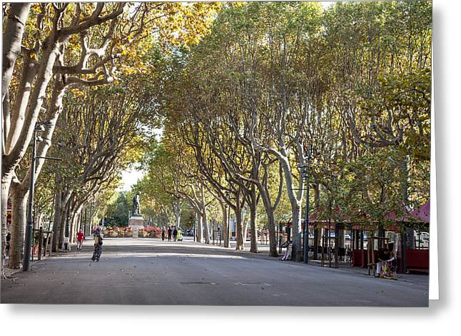 A Tree Lined Esplanade Greeting Card