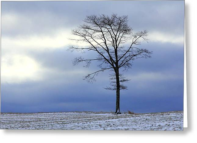 A Tree On A Field Of Snow Greeting Card
