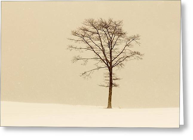 A Tree On A Hill In A Snow Storm Greeting Card