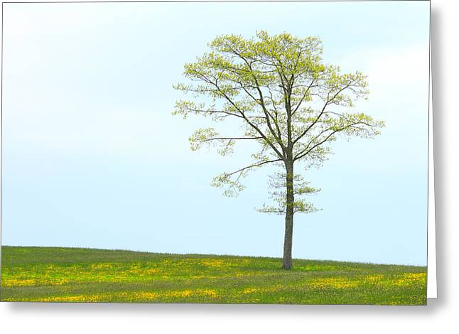 A Tree On A Hill Of Wildflowers Greeting Card