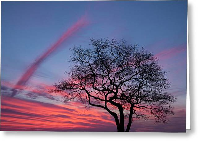 A Tree On Masons Island In The Mystic Greeting Card by Michael Melford