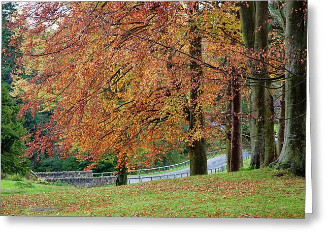A Tree With Autumn Colours Greeting Card by John Short