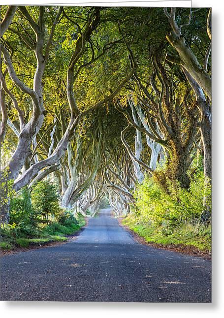 A Treelined Road In Ballymoney, County Greeting Card by Jonathan Irish